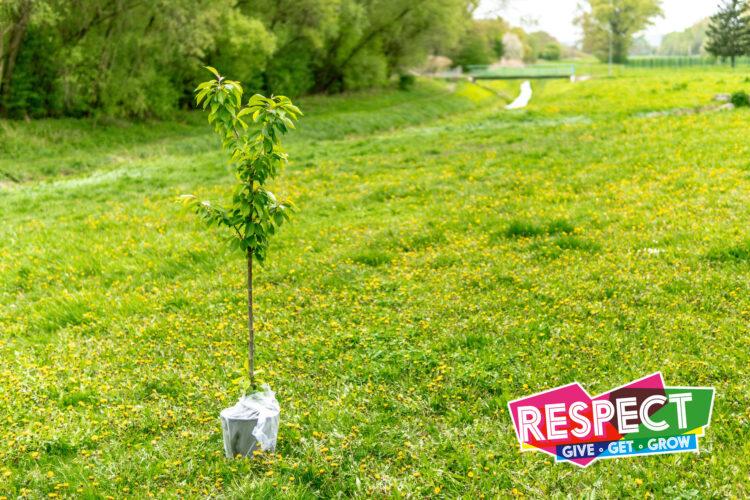 """NESCol的""""聚焦可持续发展""""计划计划种植140棵树"""