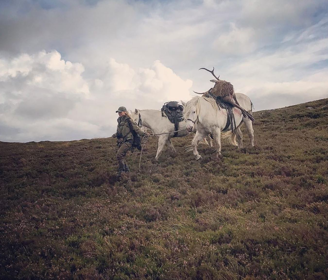 A day with a deer stalker: on the trail of Scotland's rutting stags
