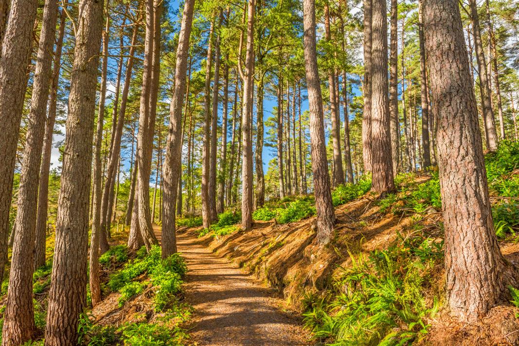 native woodland at Atholl Estates