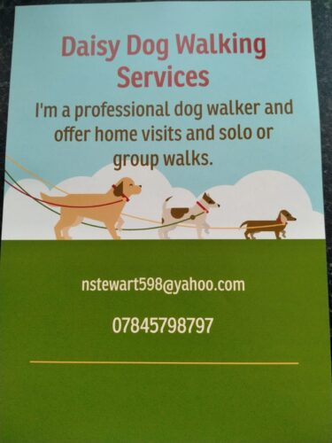 Daisy Dog Walking Services