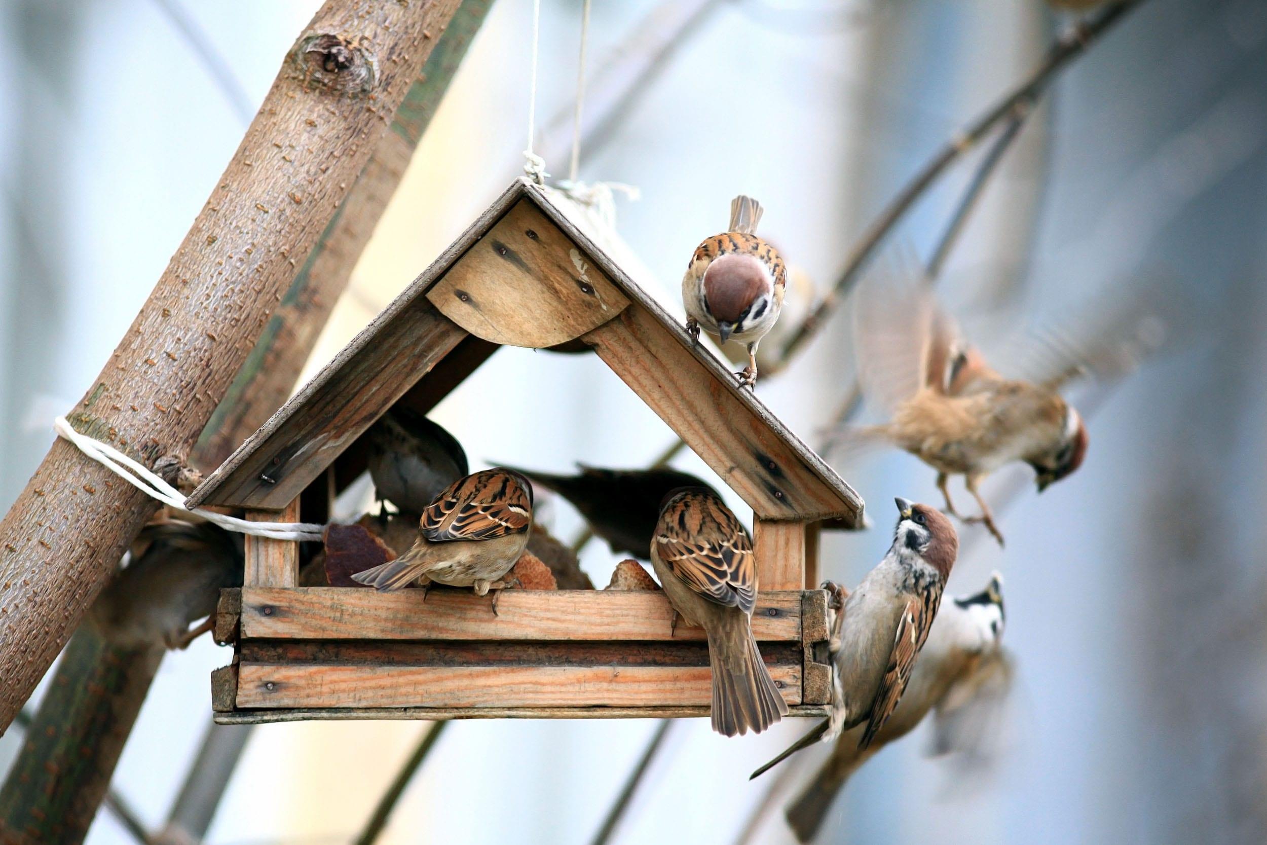 National Bird Nest Box week