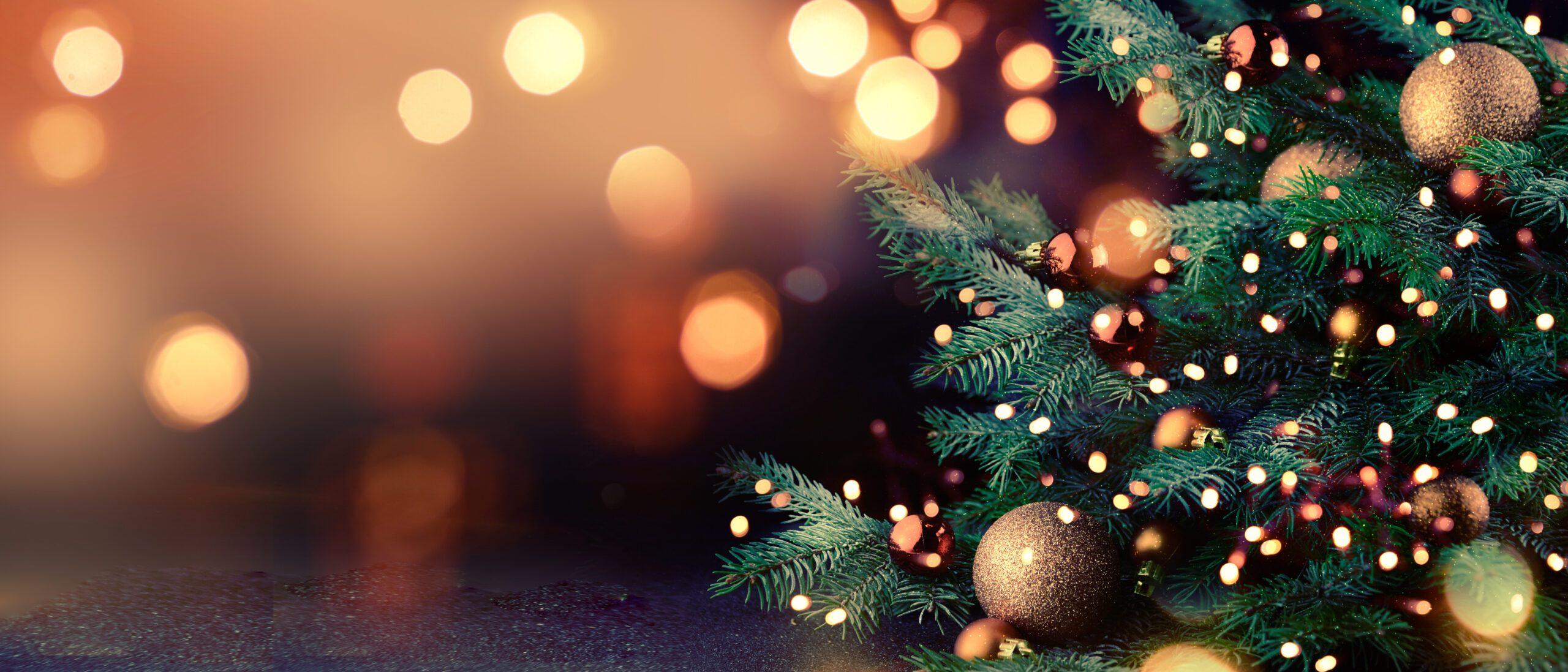 Christmas at Cardwell Garden Centre!