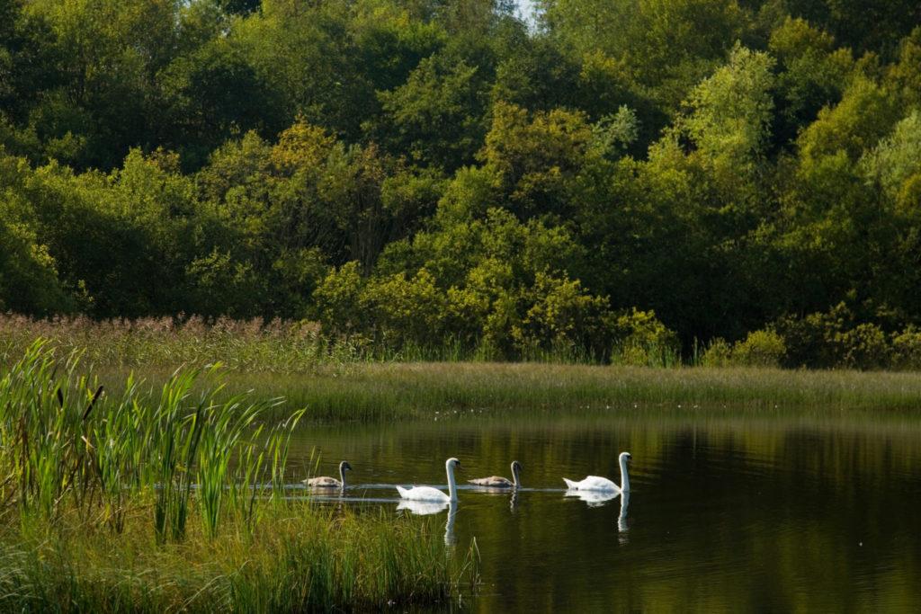 Coul Den Glenrothes reserve swans Modelrelease No Richard Newton autumn 76532