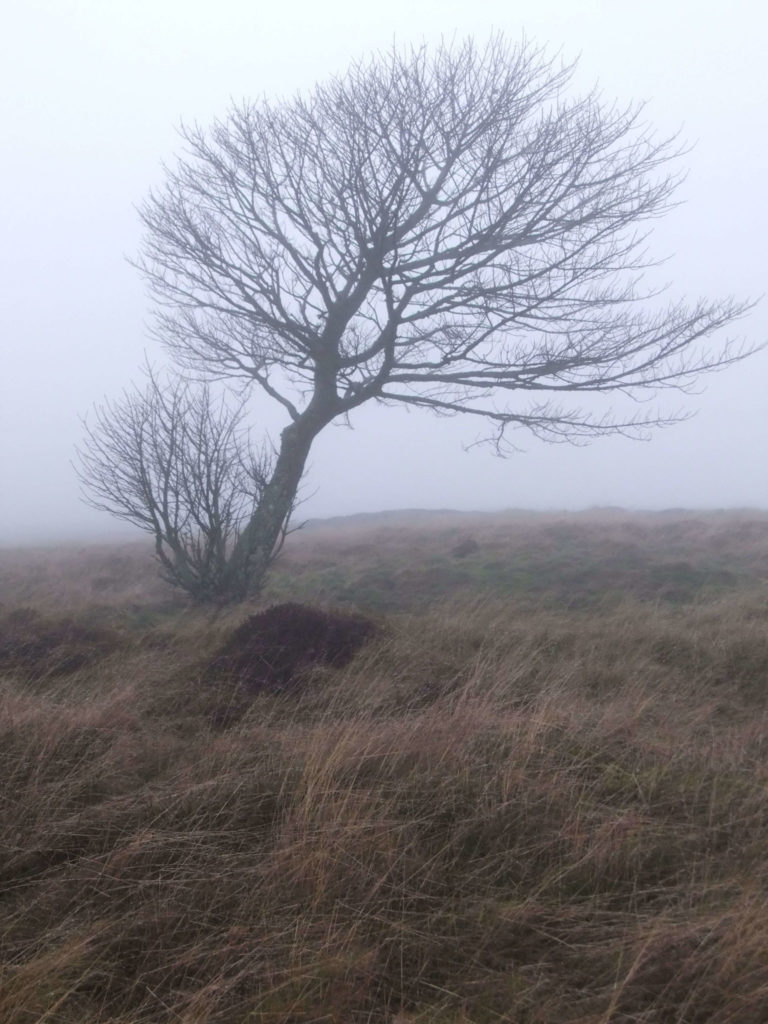 Tree within East Lomond Hills