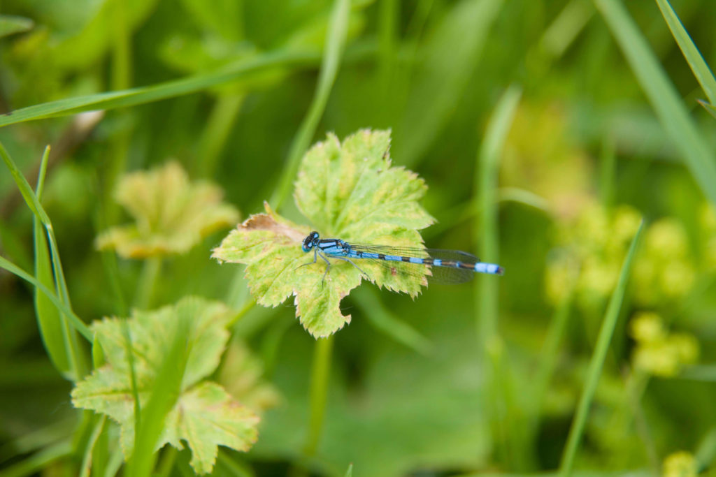 Dragonfly spotted in Coul Den
