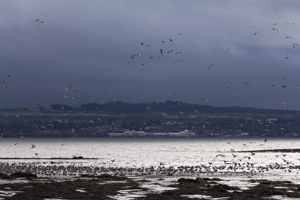 Geese circling over Torryburn Bay