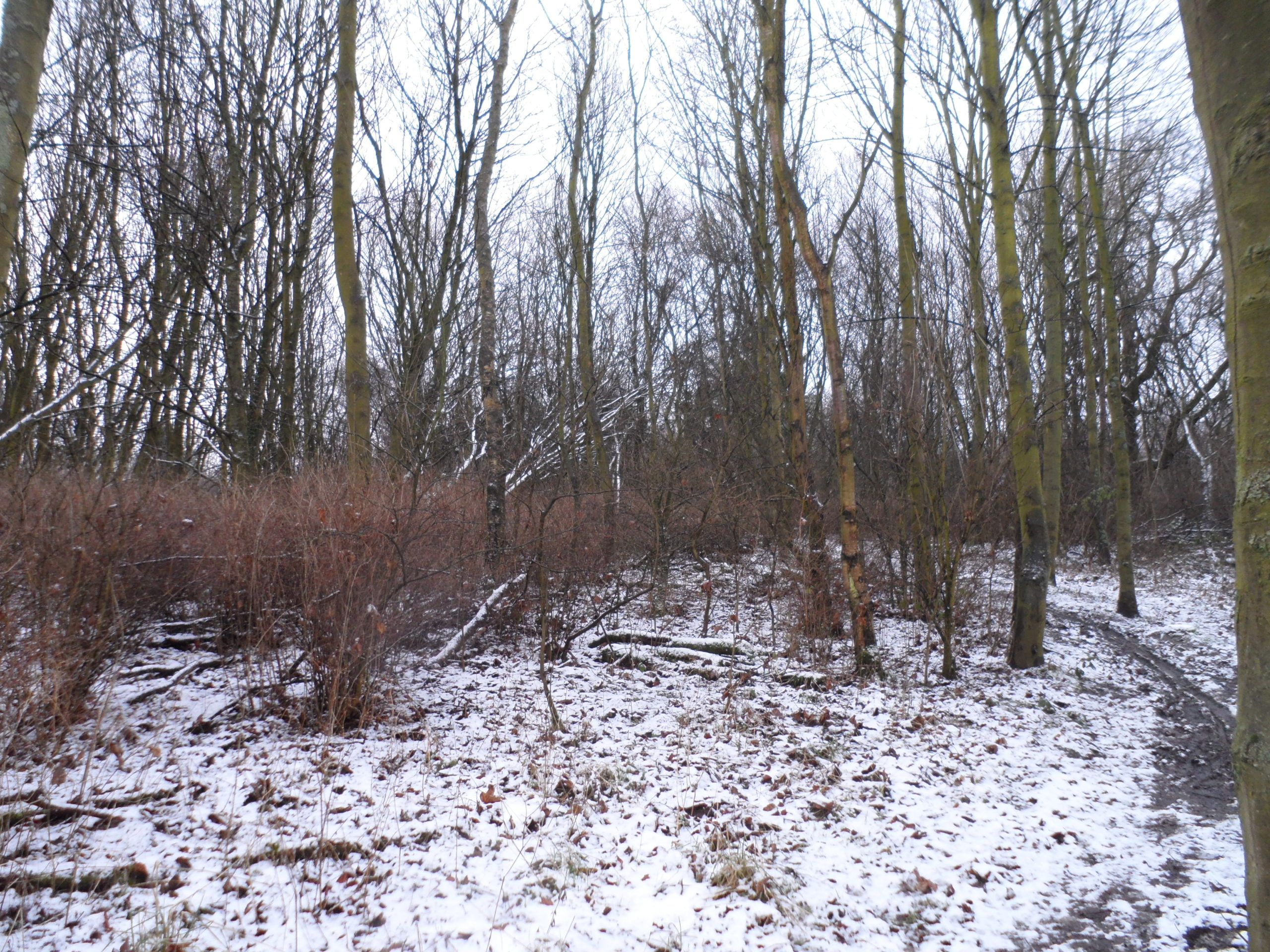 Winter Tree Identification Walk – Birnie and Gaddon Lochs
