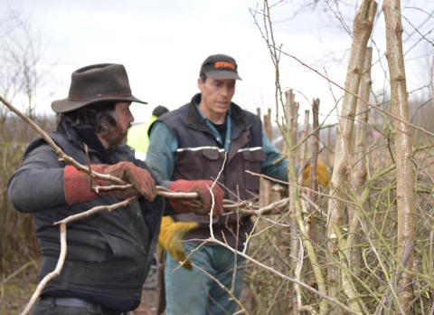 Hedgelaying Weekend 2020