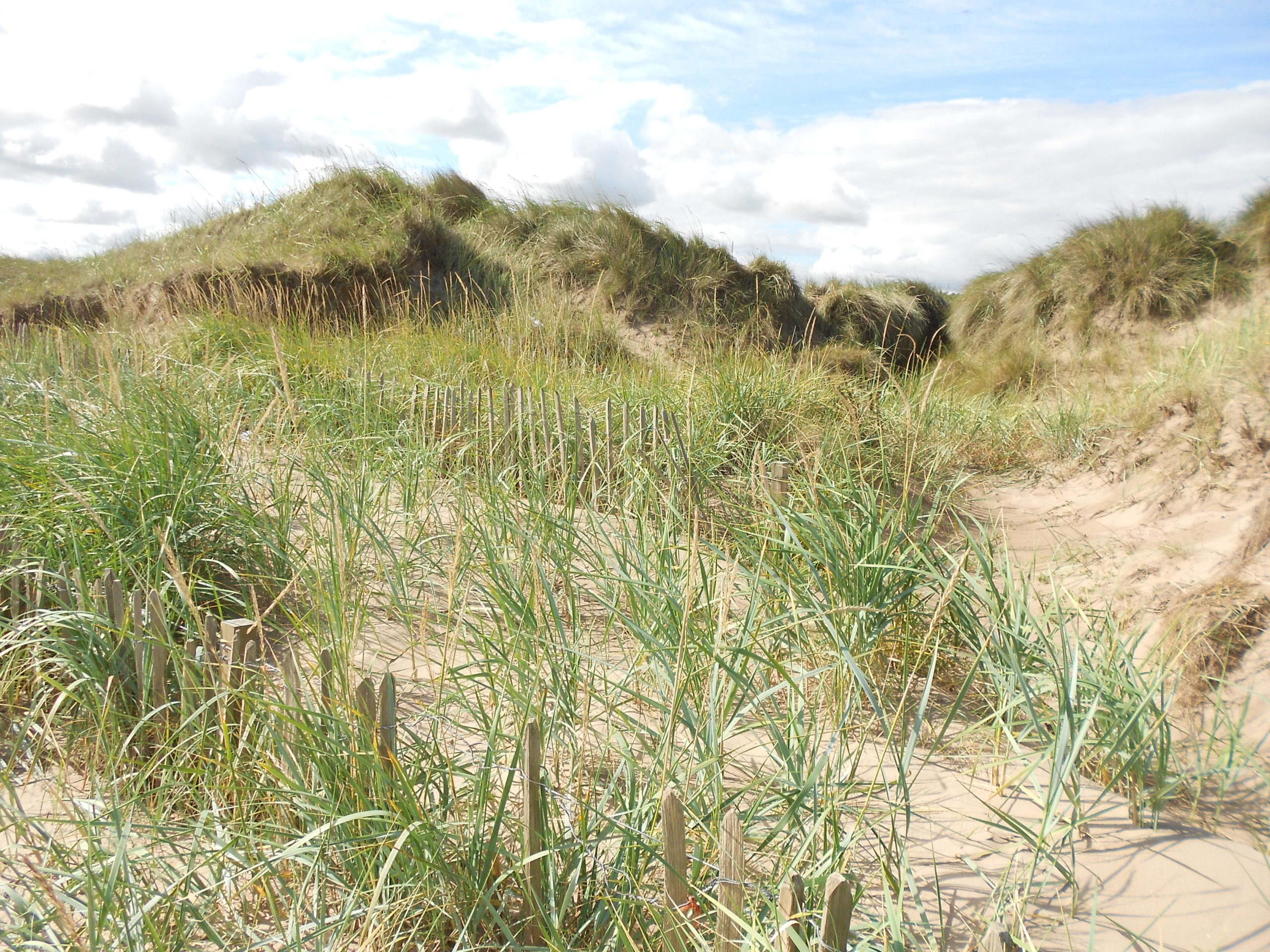 Dune Action Day: Christmas Tree Crater, West Sands St Andrews