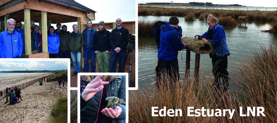 Eden Estuary graphic