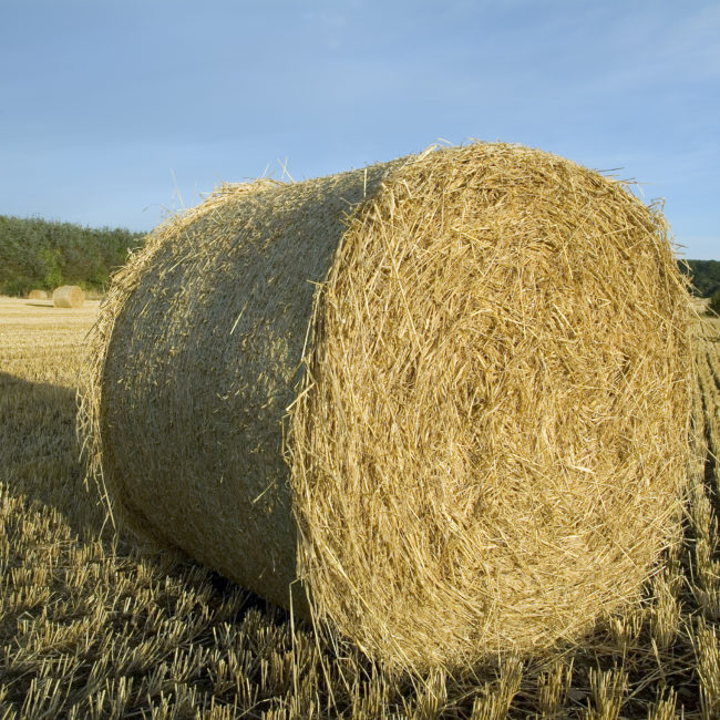 Hay bale in early morning light close up