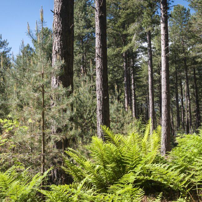 Roseisle Forest near Burghead, Moray, Aberdeenshire, Scotland