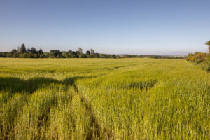 Greendams steading view for sale on Leys Estate