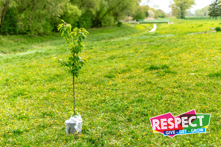 NESCol's Spotlight on Sustainability aims to plant 140 trees