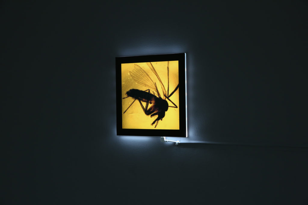 Sandfly in amber on a lightbox