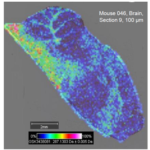 MALDI-MS image of drug distribution in a mouse spleen