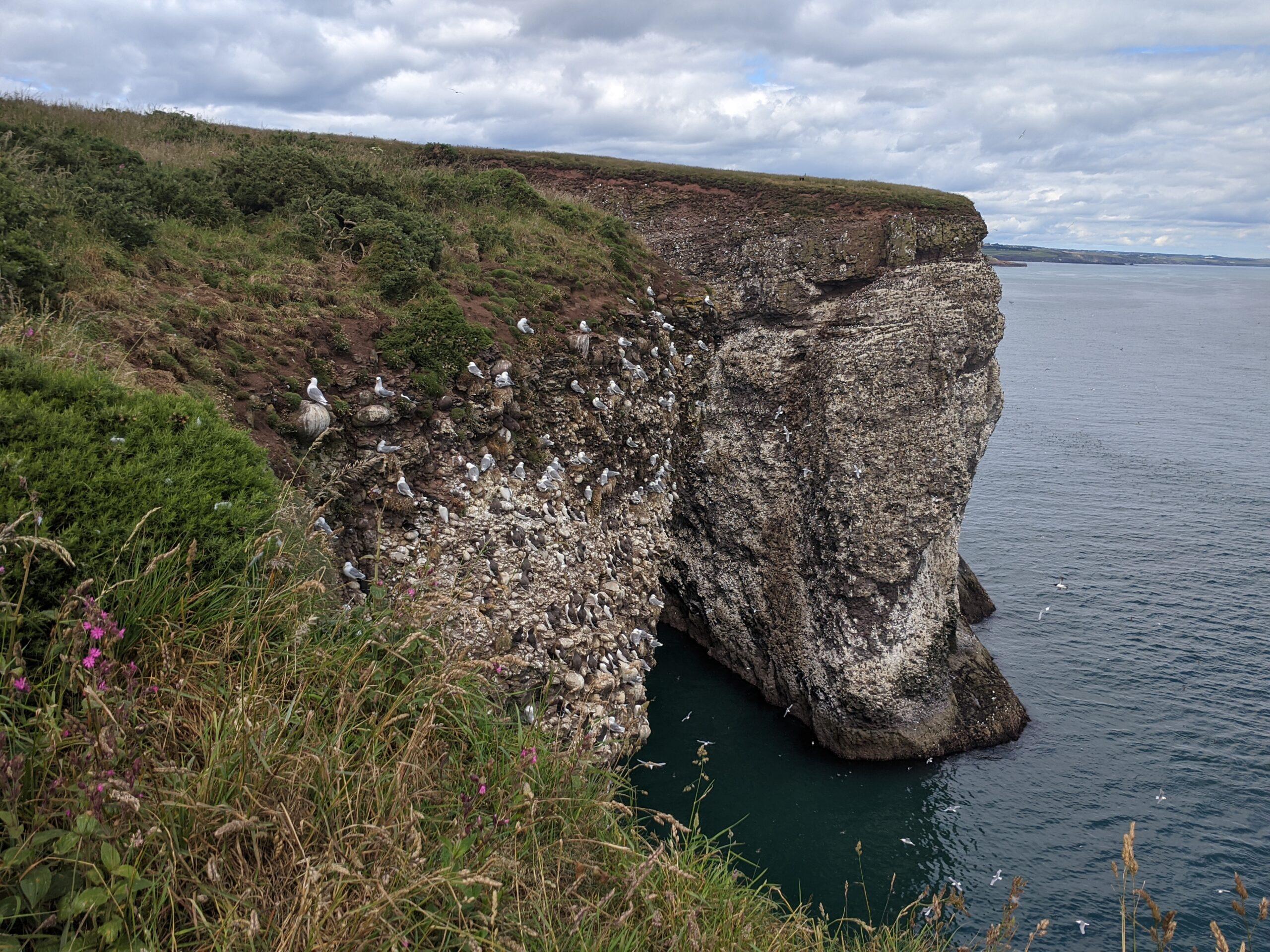 Cliffs near Stonehaven